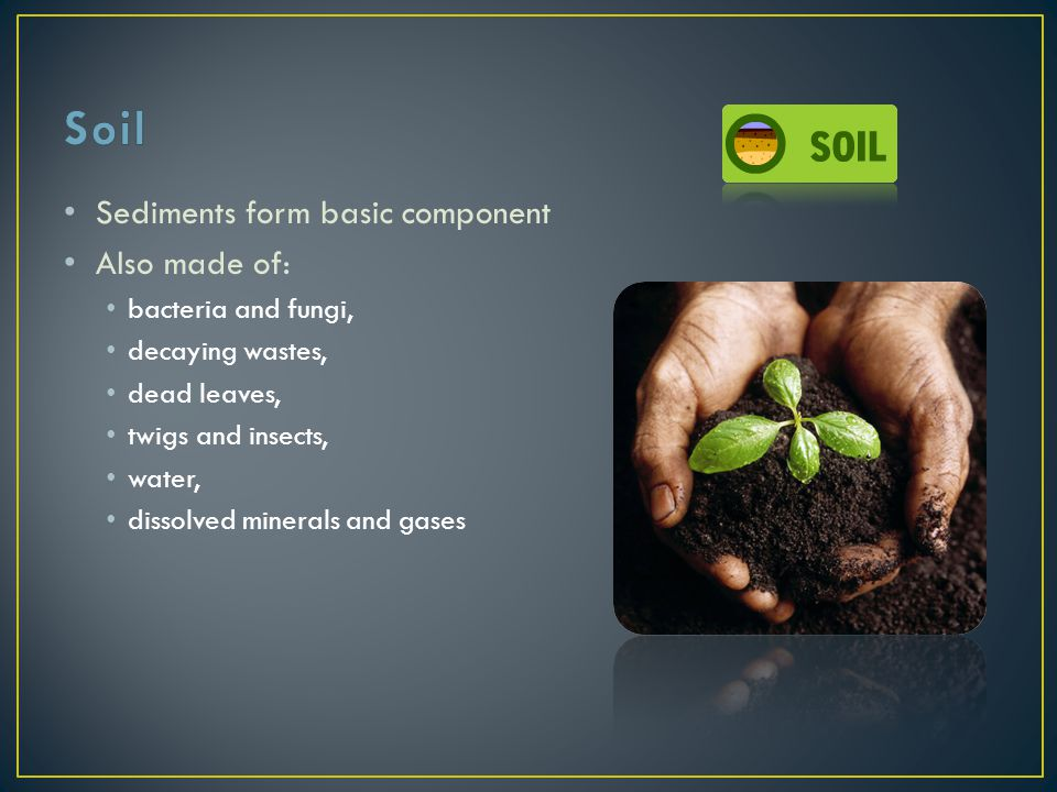 Soil Sediments form basic component Also made of: bacteria and fungi,
