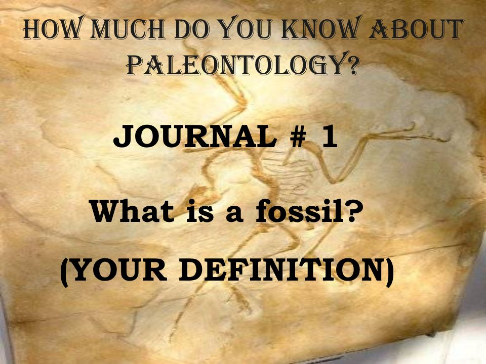 How much do you know about Paleontology