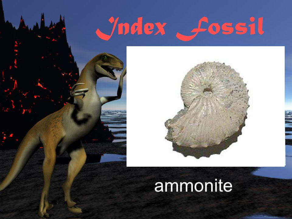 Index Fossil ammonite