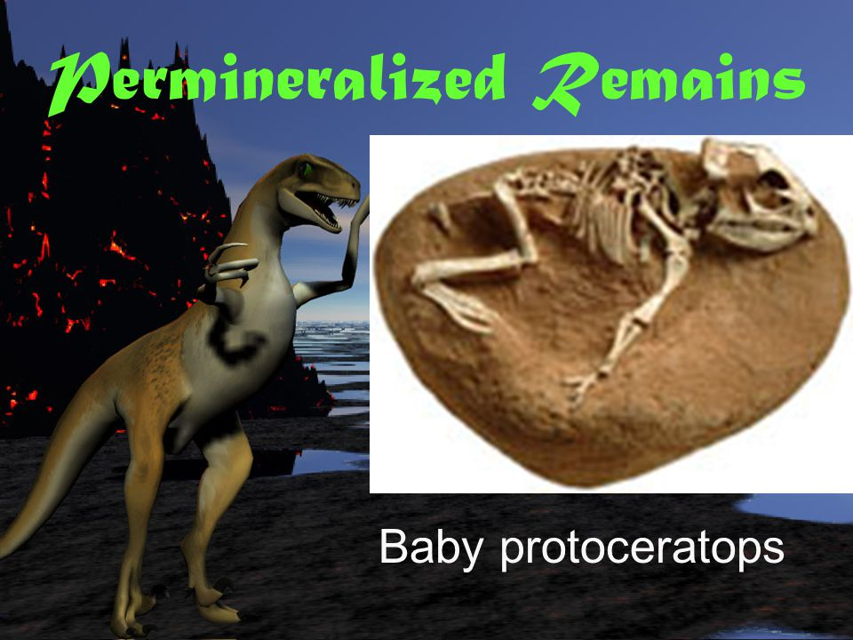 Permineralized Remains