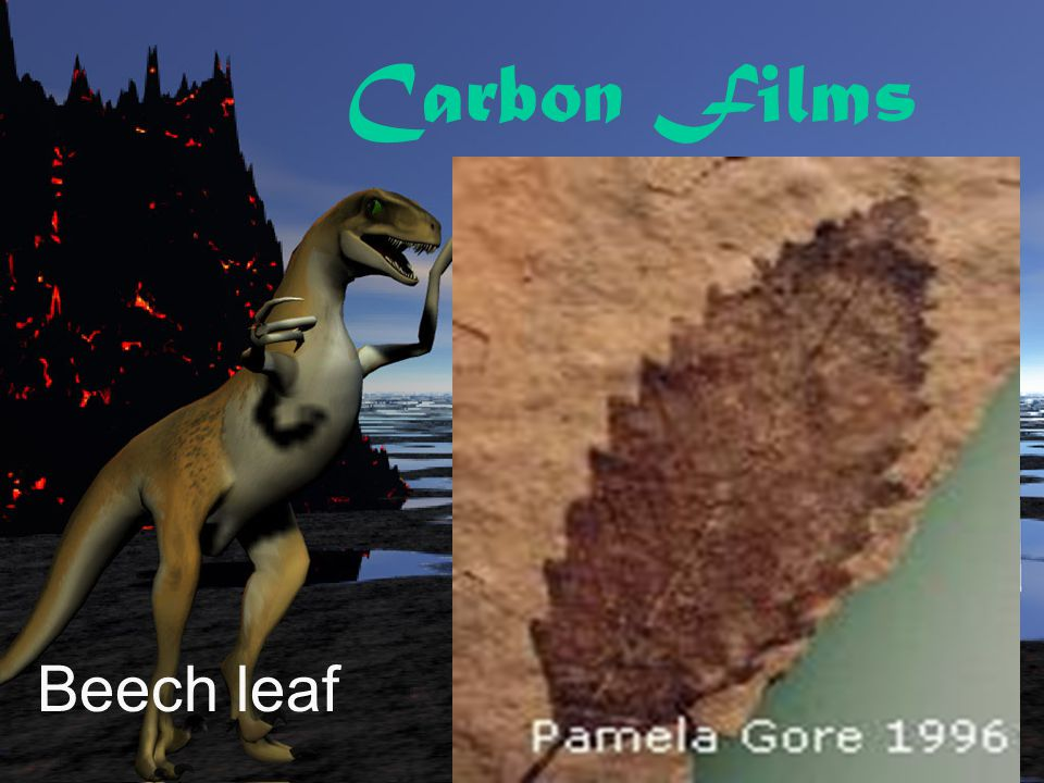 Carbon Films Beech leaf