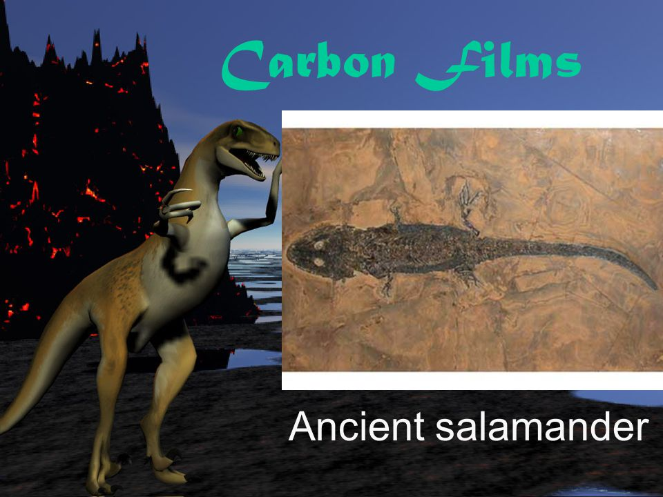Carbon Films Ancient salamander