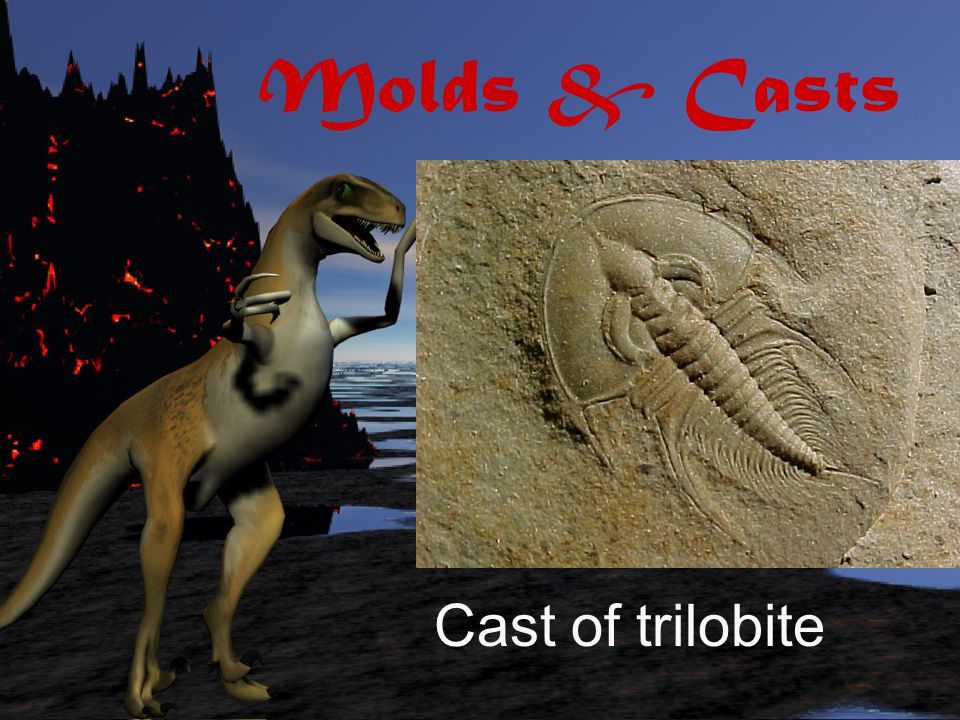 Molds & Casts Cast of trilobite