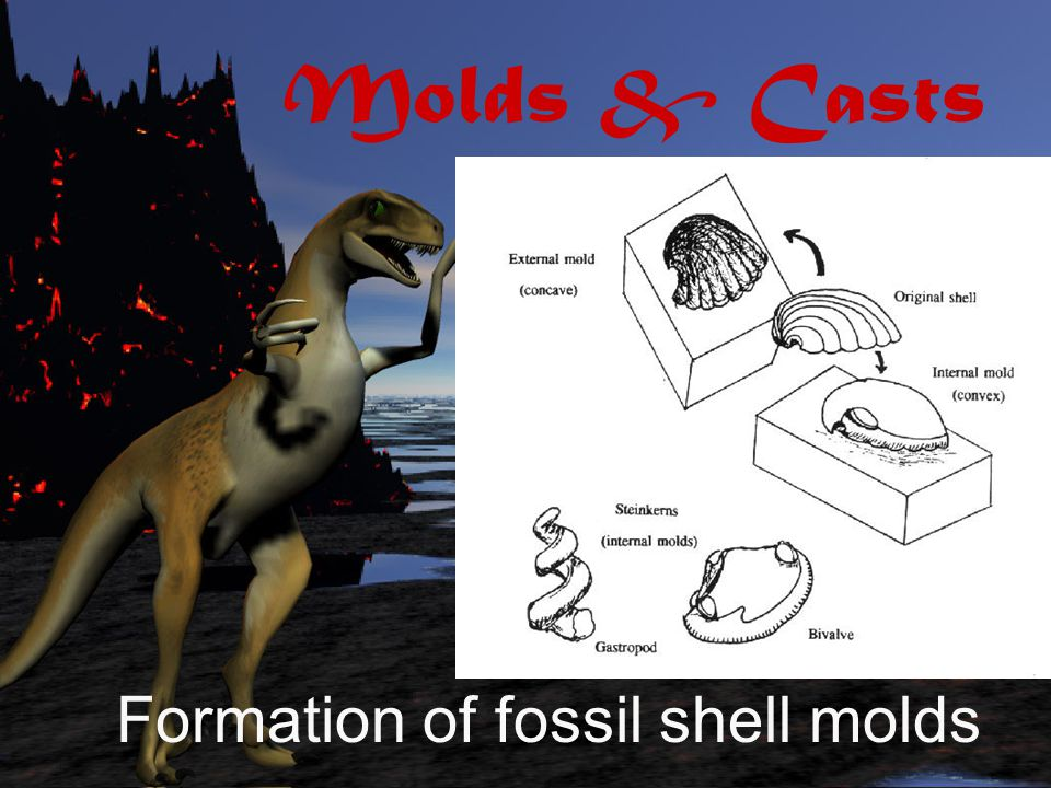 Molds & Casts Formation of fossil shell molds