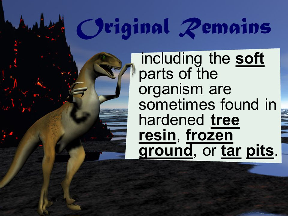 Original Remains including the soft parts of the organism are sometimes found in hardened tree resin, frozen ground, or tar pits.