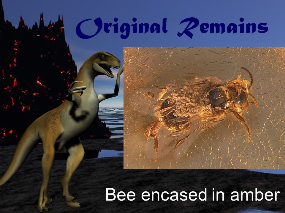 Original Remains Bee encased in amber