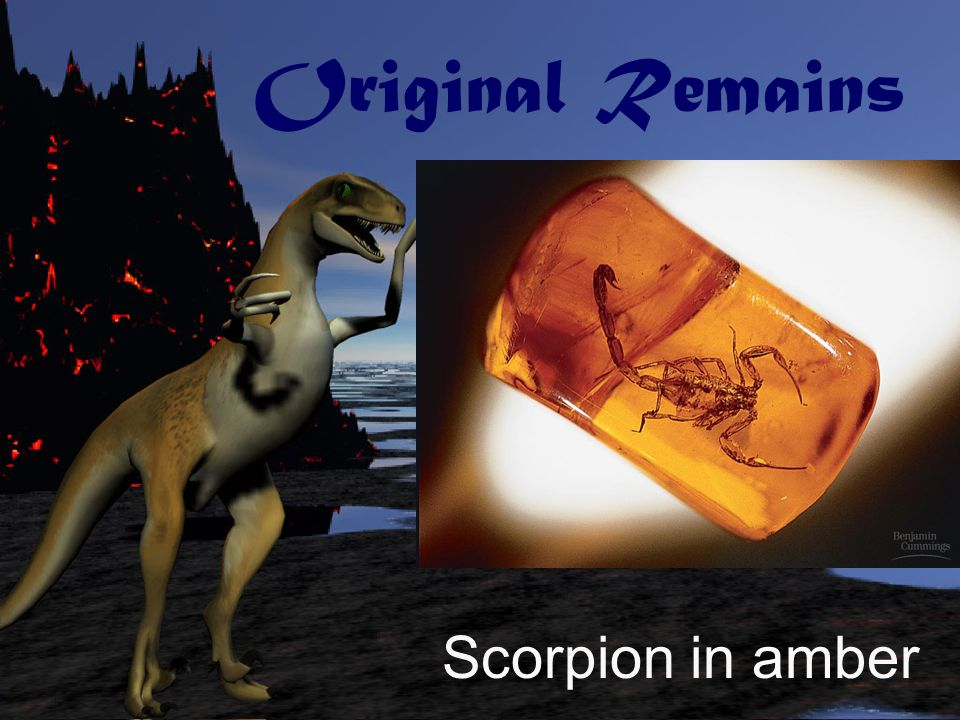 Original Remains Scorpion in amber