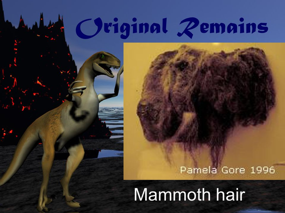Original Remains Mammoth hair