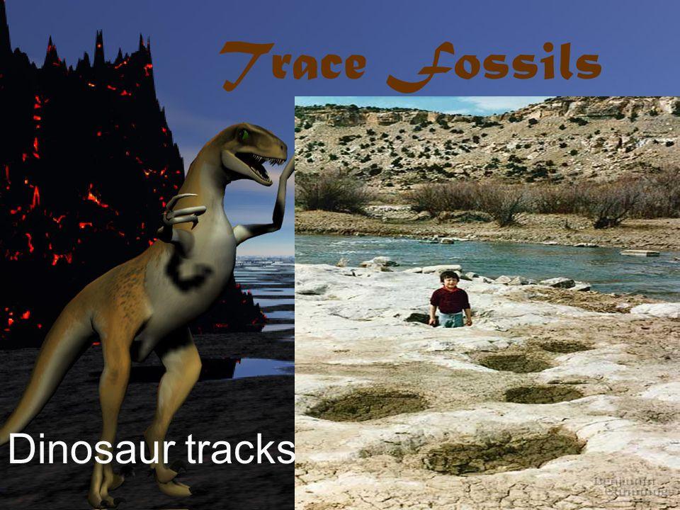 Trace Fossils Dinosaur tracks