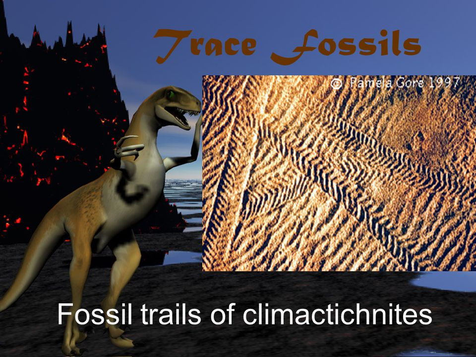 Trace Fossils Fossil trails of climactichnites