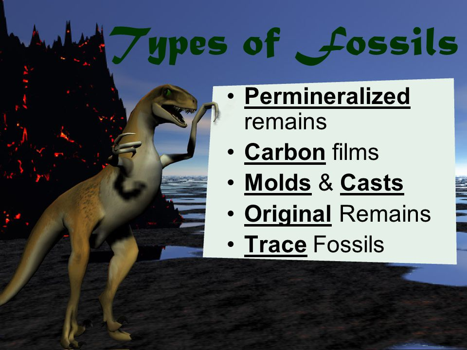Types of Fossils Permineralized remains Carbon films Molds & Casts