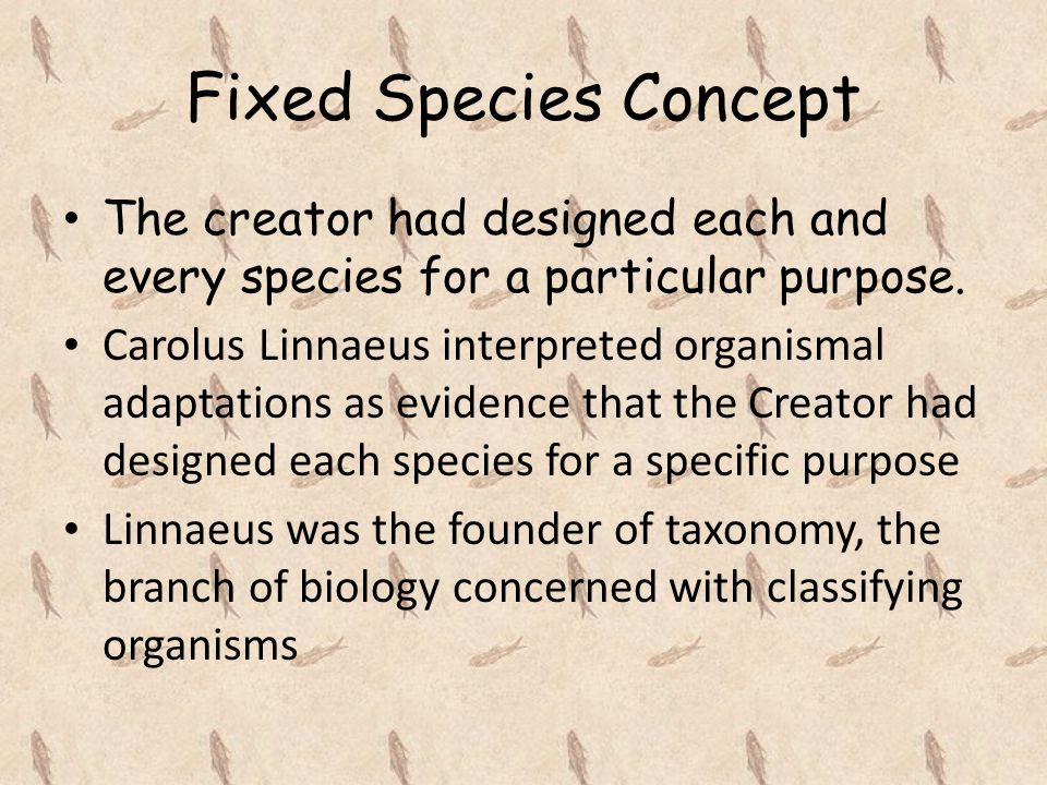 Fixed Species Concept The creator had designed each and every species for a particular purpose.