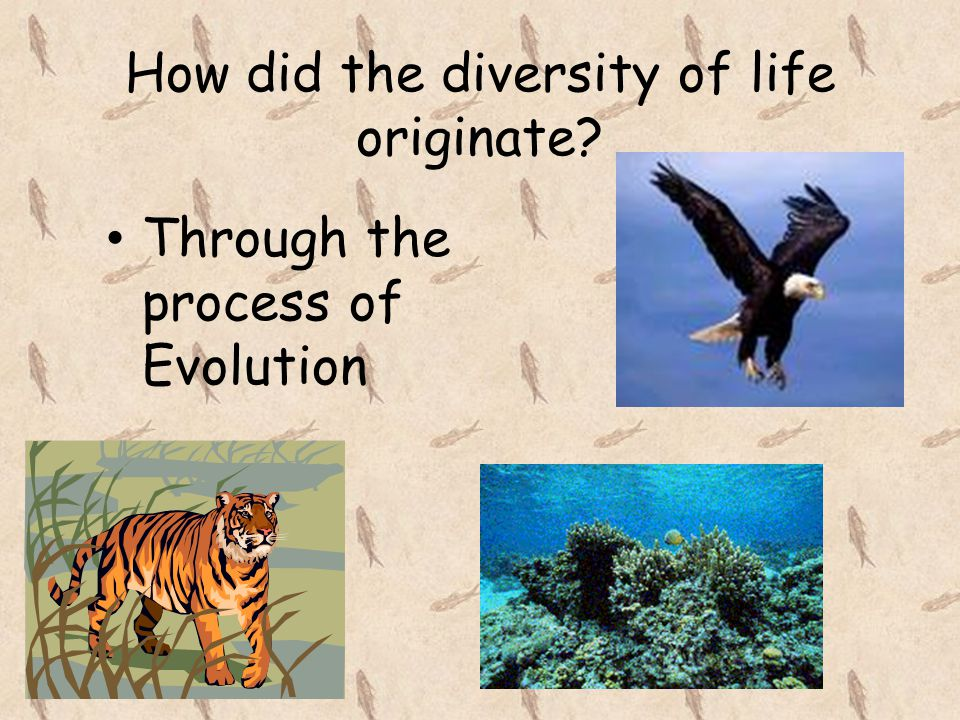 How did the diversity of life originate
