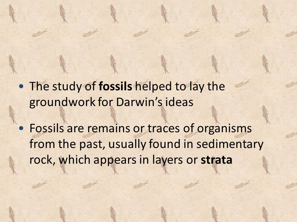 The study of fossils helped to lay the groundwork for Darwin's ideas