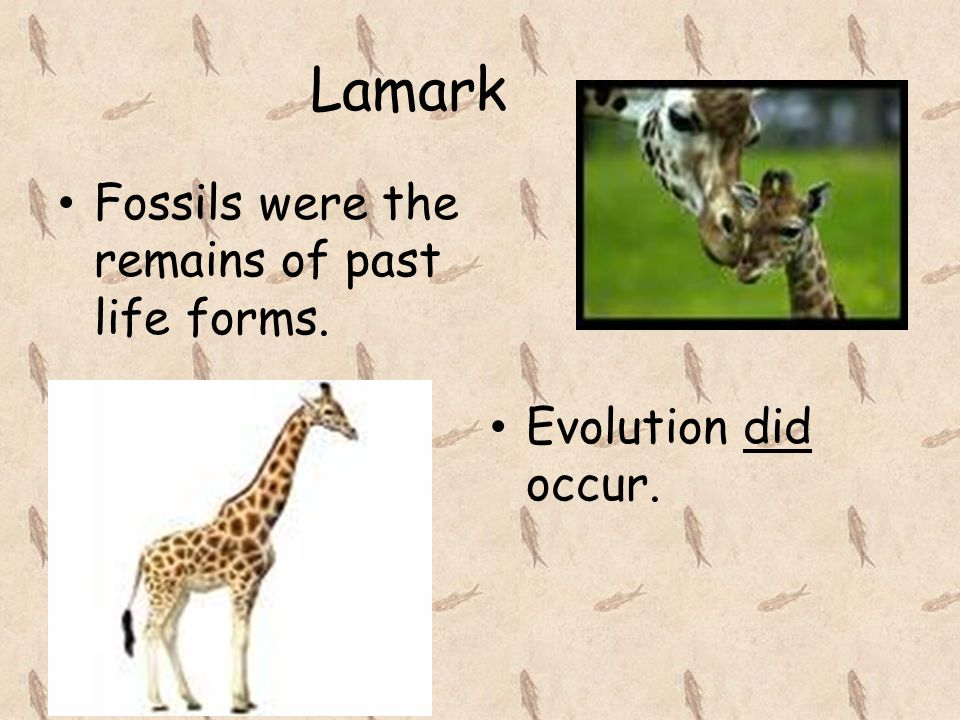Lamark Fossils were the remains of past life forms.