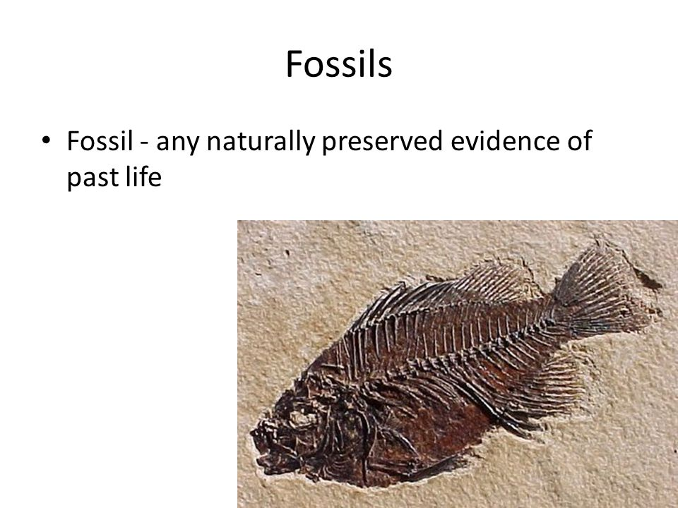 Fossils Fossil - any naturally preserved evidence of past life