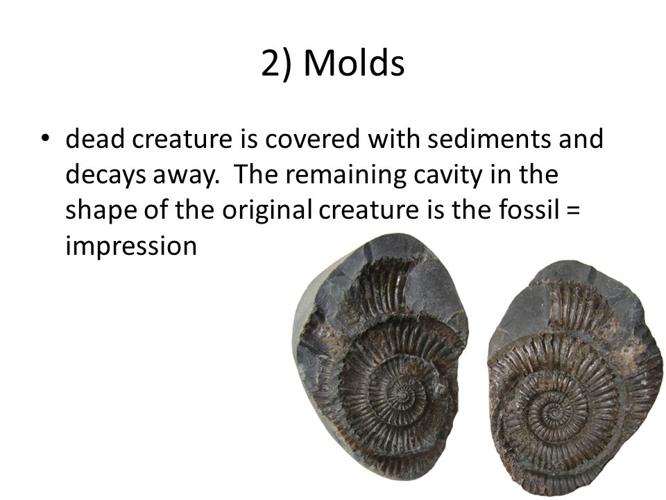 2) Molds