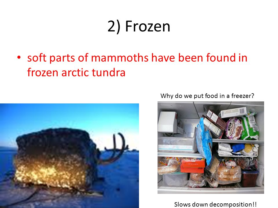 2) Frozen soft parts of mammoths have been found in frozen arctic tundra. Why do we put food in a freezer