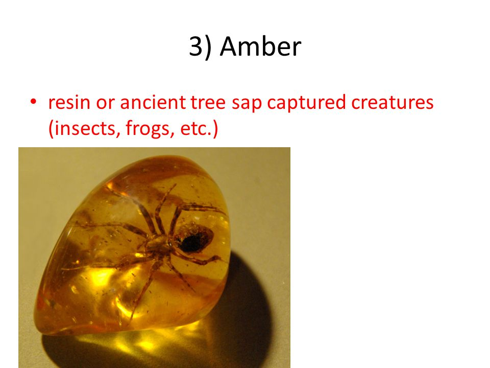 3) Amber resin or ancient tree sap captured creatures (insects, frogs, etc.)
