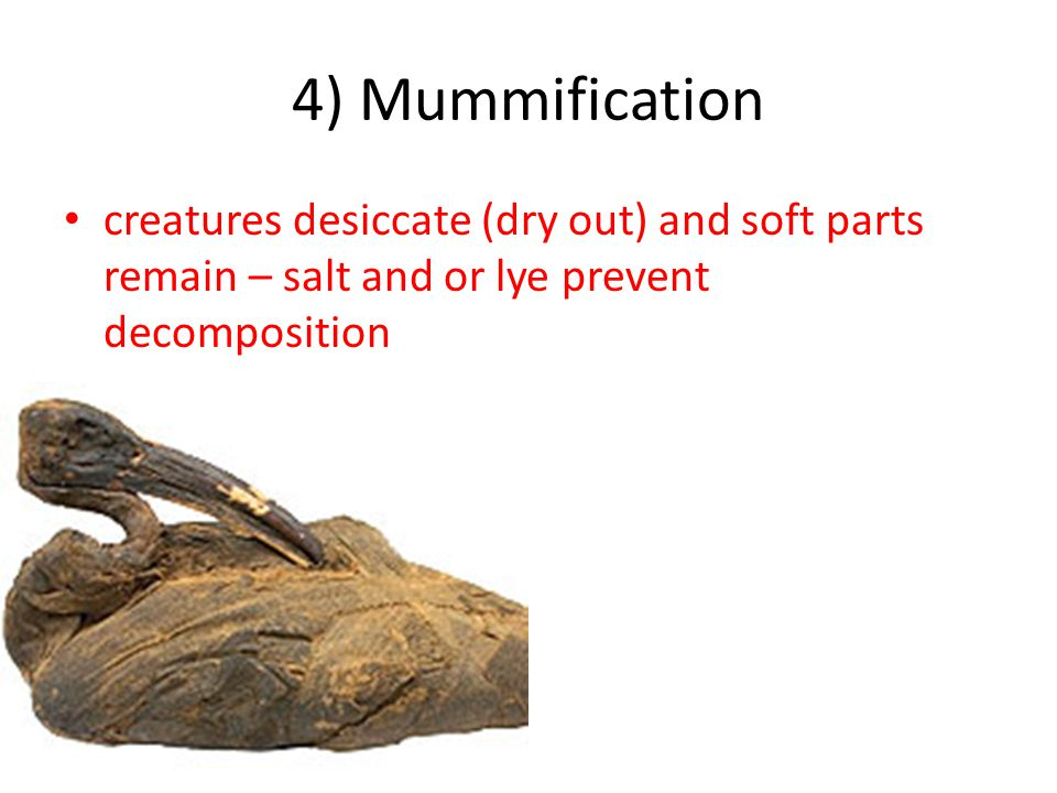 4) Mummification creatures desiccate (dry out) and soft parts remain – salt and or lye prevent decomposition.