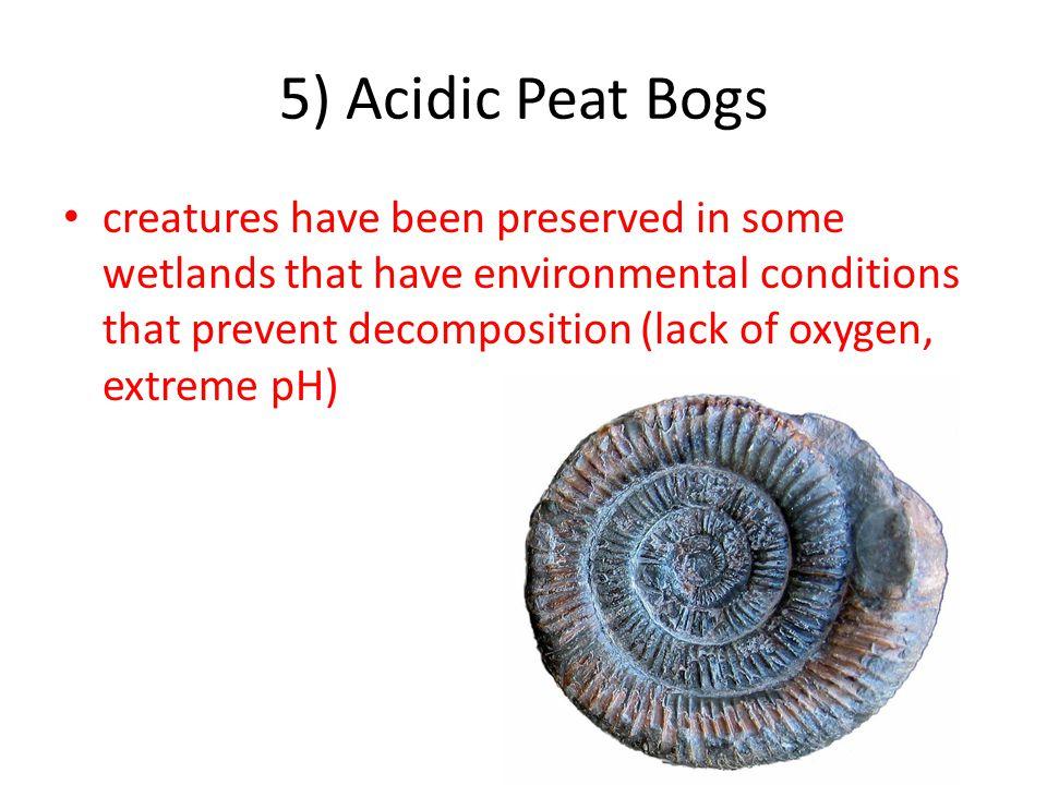 5) Acidic Peat Bogs