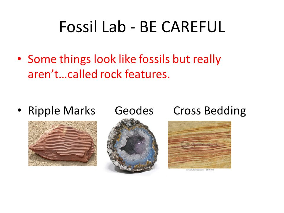 Fossil Lab - BE CAREFUL Some things look like fossils but really aren't…called rock features.