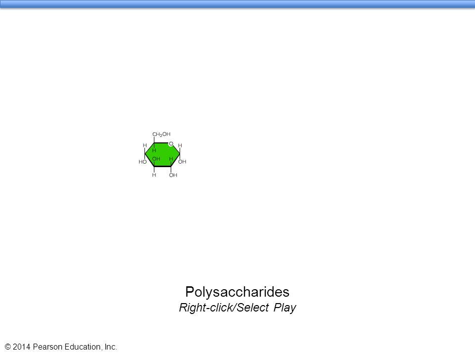 Polysaccharides Right-click/Select Play
