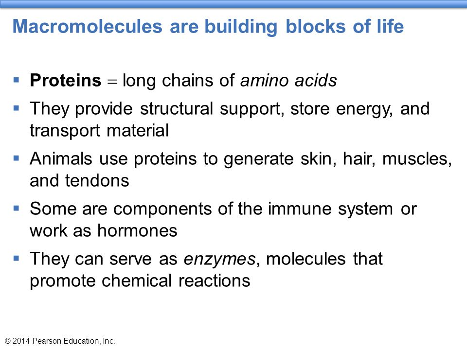 Macromolecules are building blocks of life