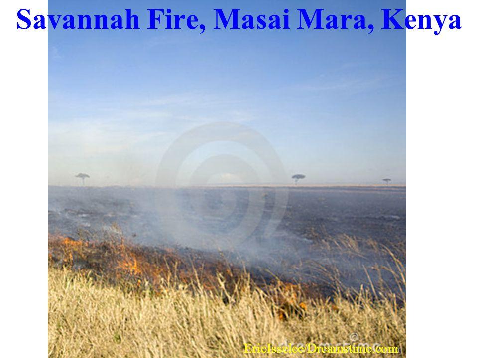 Savannah Fire, Masai Mara, Kenya
