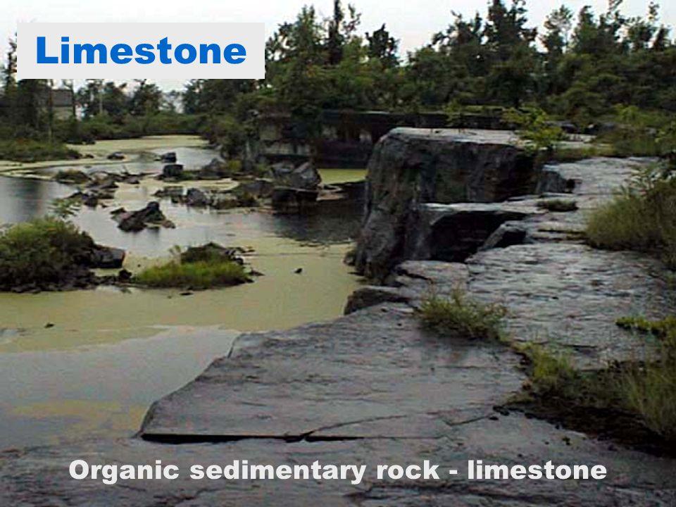 Organic sedimentary rock - limestone