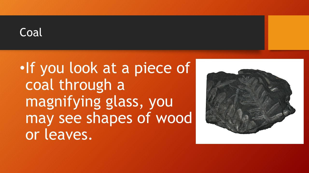 Coal If you look at a piece of coal through a magnifying glass, you may see shapes of wood or leaves.