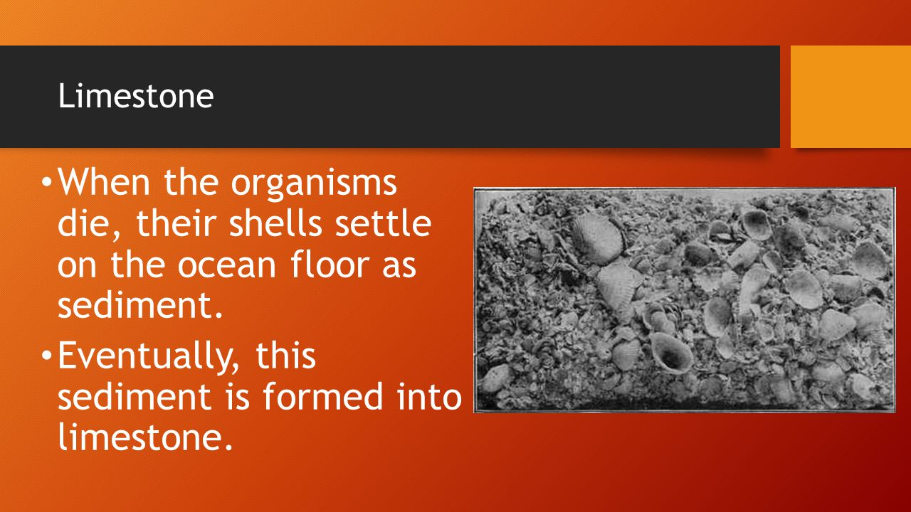 Eventually, this sediment is formed into limestone.
