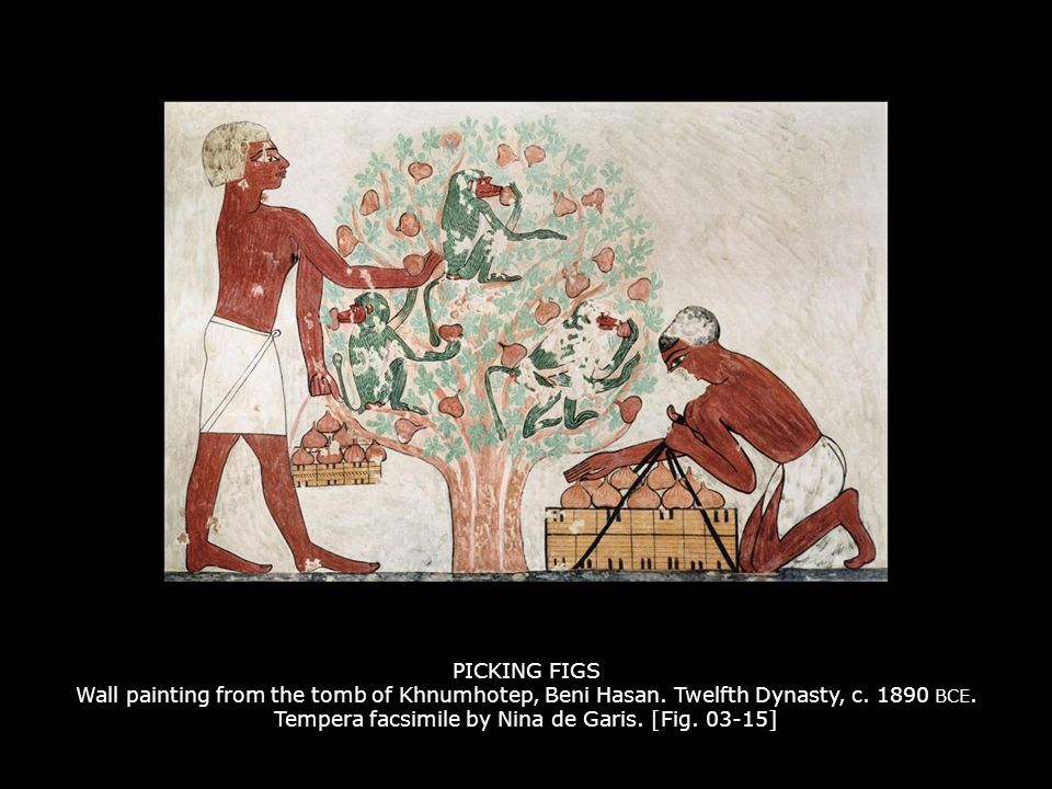 PICKING FIGS Wall painting from the tomb of Khnumhotep, Beni Hasan