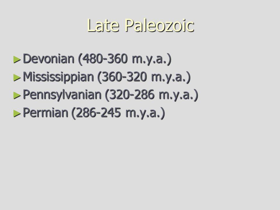 Late Paleozoic Devonian (480-360 m.y.a.)
