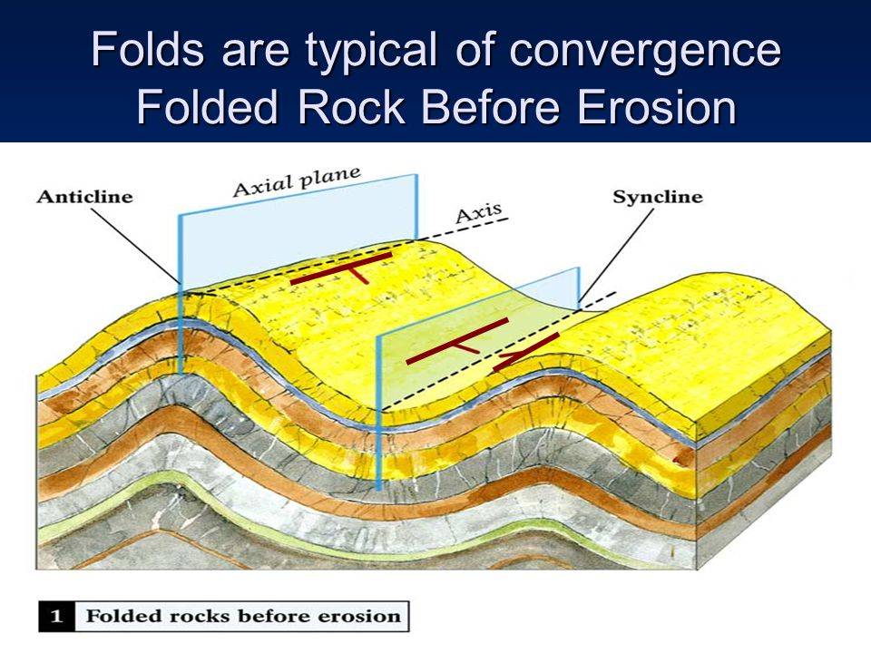 Folds are typical of convergence Folded Rock Before Erosion