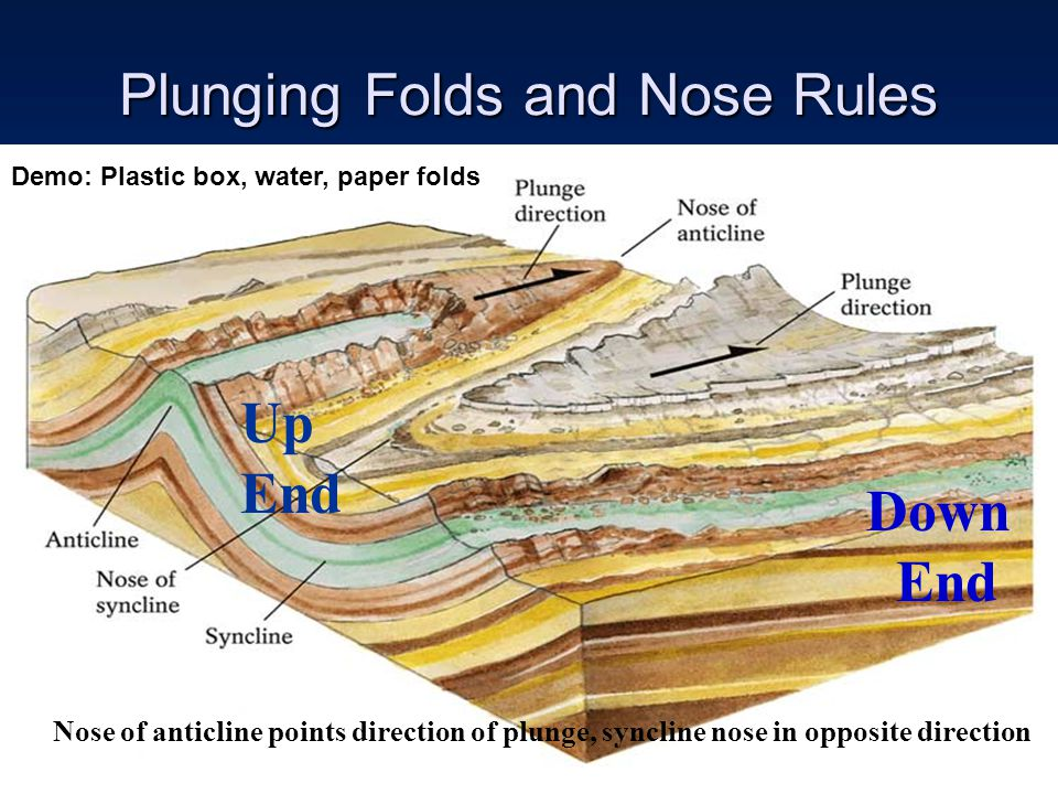 Plunging Folds and Nose Rules