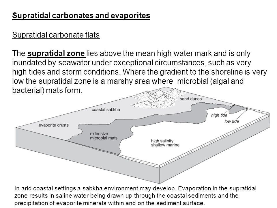 Supratidal carbonates and evaporites