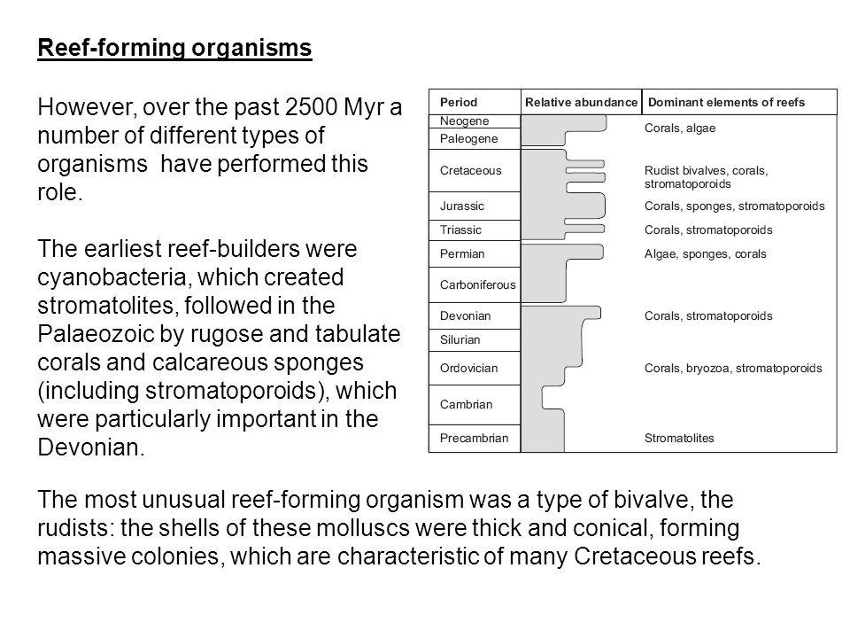 Reef-forming organisms