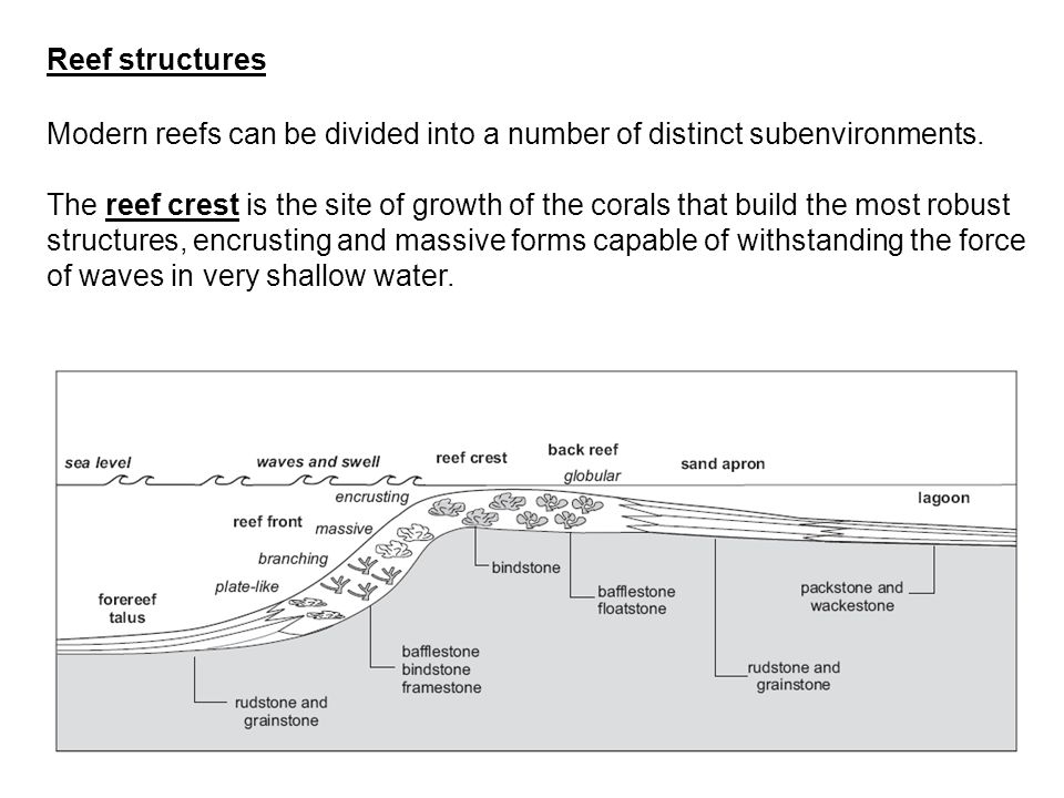 Reef structures Modern reefs can be divided into a number of distinct subenvironments.