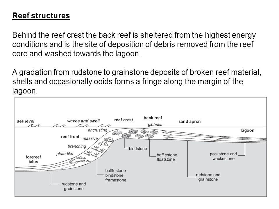 Reef structures