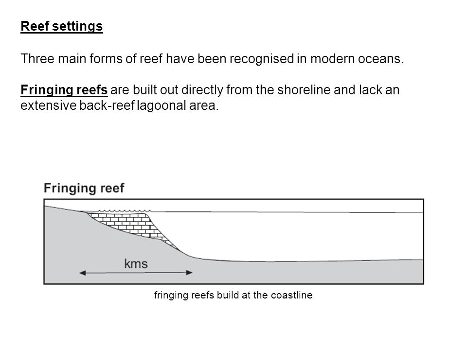 fringing reefs build at the coastline