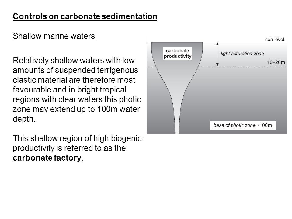 Controls on carbonate sedimentation