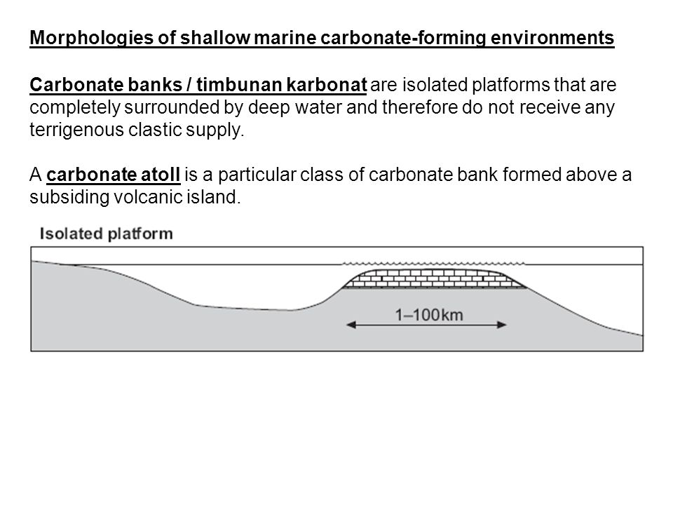 Morphologies of shallow marine carbonate-forming environments