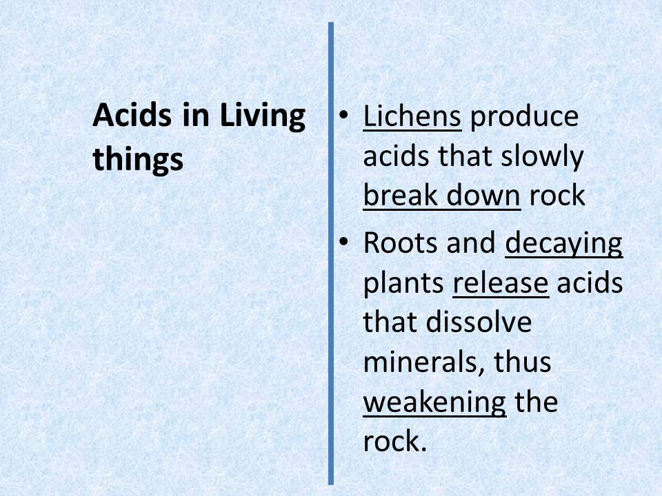 Acids in Living things Lichens produce acids that slowly break down rock.