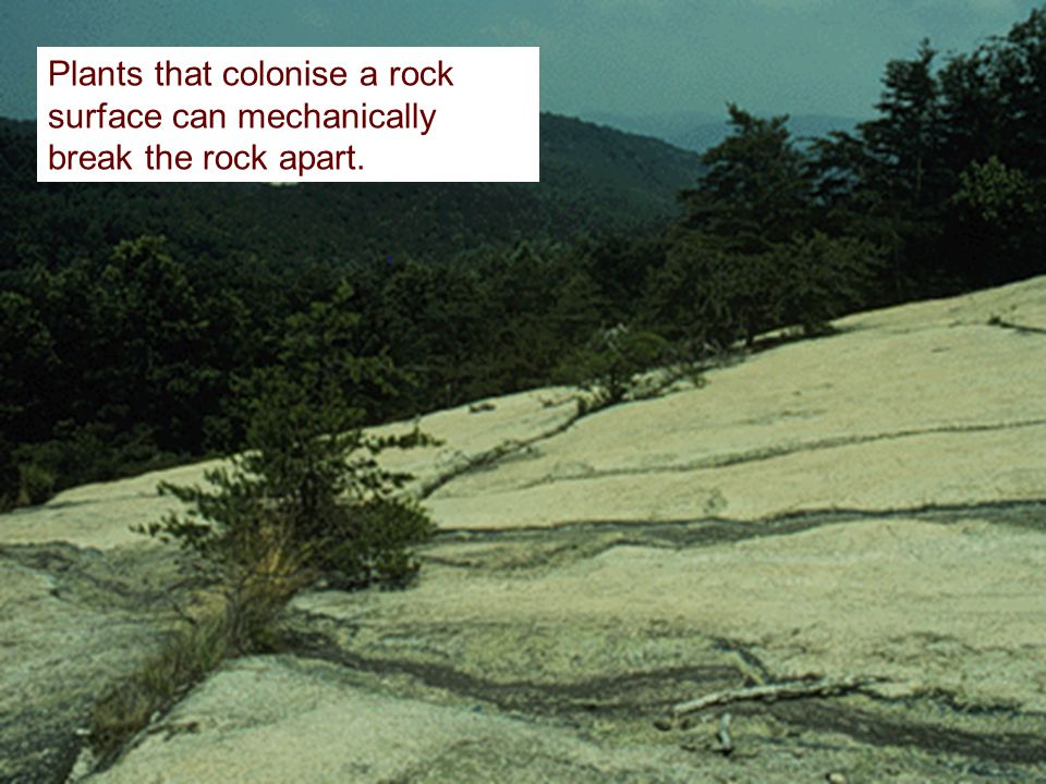 Plants that colonise a rock surface can mechanically break the rock apart.