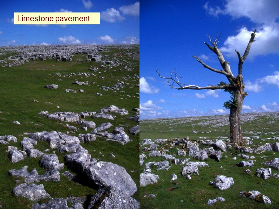 Limestone pavement.