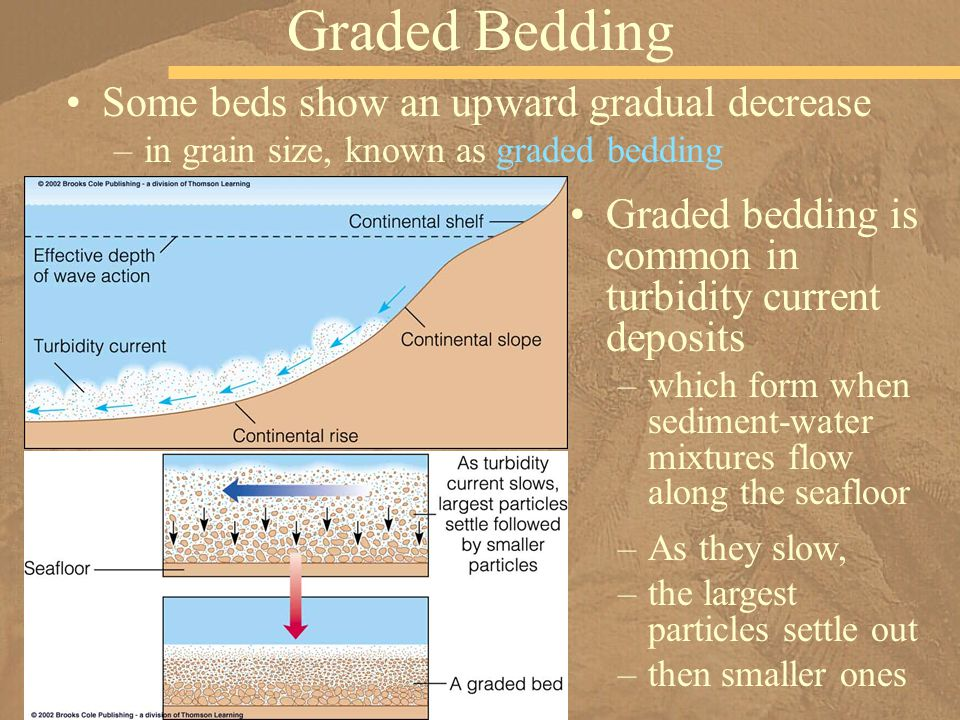 Graded Bedding Some beds show an upward gradual decrease