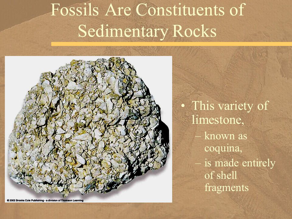 Fossils Are Constituents of Sedimentary Rocks