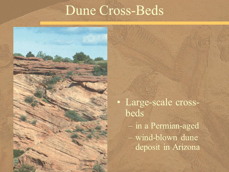 Dune Cross-Beds Large-scale cross-beds in a Permian-aged