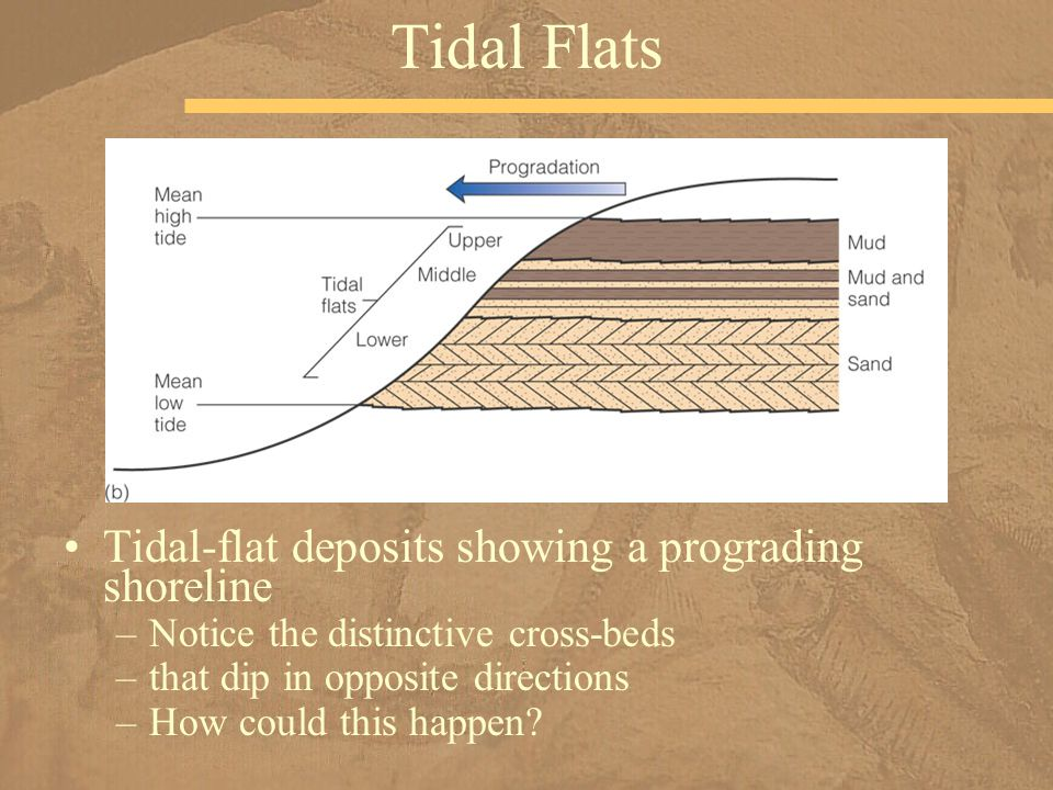 Tidal Flats Tidal-flat deposits showing a prograding shoreline